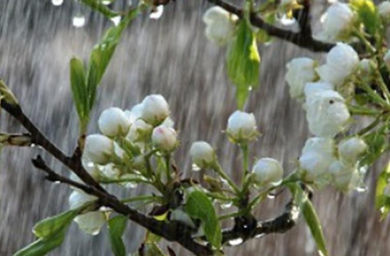 Погода сохраняется теплой, а в некоторых регионах пройдут дожди