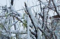 Комрат: обломаны деревья, оборваны провода, транспорт не ходит (фоторепортаж)