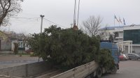 В Комрате установили новогоднюю елку. Завтра она будет наряжена! (фоторепортаж)