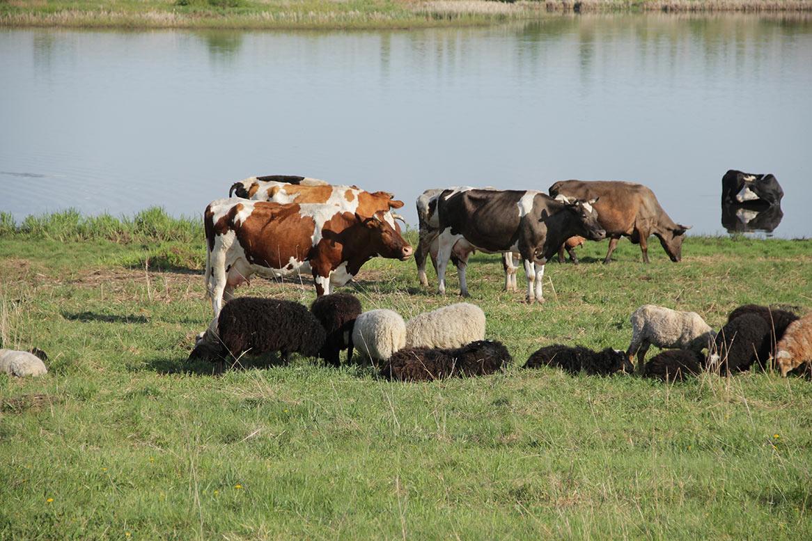 Вниманию владельцев крупного и мелкого рогатого скота